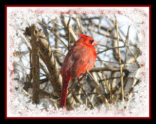 Cardinal 1-EIM